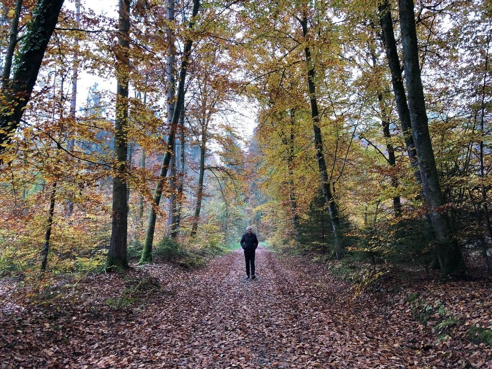 Herbstwald-Allensbach