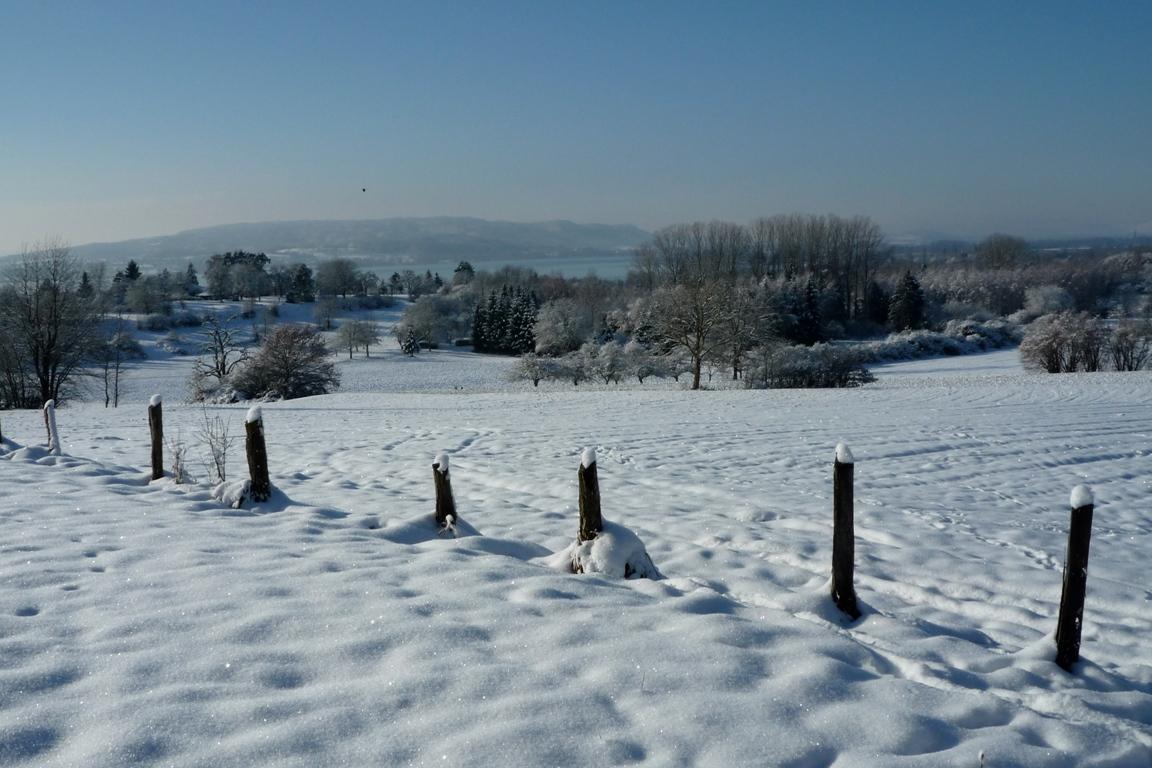 Winterlandschaft_Allensbach