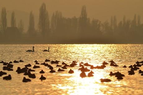Wasserlandschaft-Vogelwelt